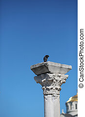 pigeon sitting on Part of a column of the Christian temple...