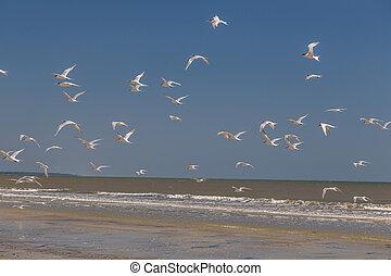 tengerpart, menekülés, madarak