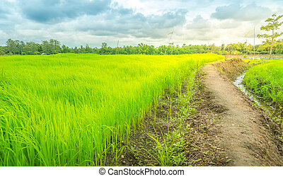 the way in green farm,countryside of Thailand