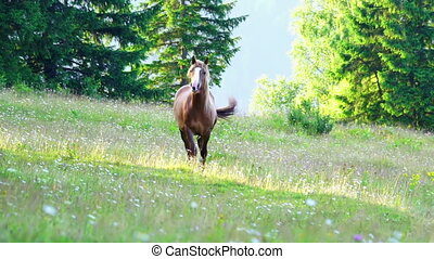 Horse Grazing in a Meadow at Sunrise in the Mountains