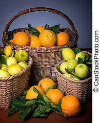 Harvest of citrus - Baskets full of citrus fruits after the...