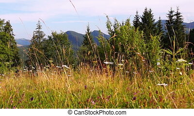 Mountain Landscape in the Carpathian
