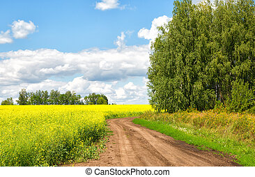 Landscape with the road along a field of the blossoming...