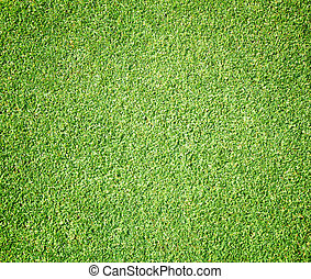 Golf Courses green lawn natural texture background.