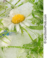 Abstract of daisy flower