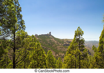 Roque Nublo and Canaria Pine trees - Inland Central Gran...
