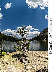 Gnarly Tree at the Loch - A gnarly tree on a rock at the...