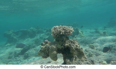 Coral reef as part of beautiful undersea world - Slow motion...
