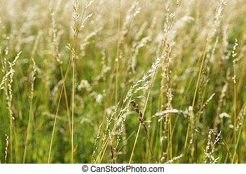 Meadow.