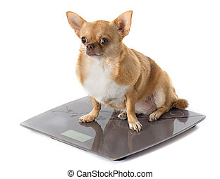 bathroom scales and fat dog - bathroom scales and fat...