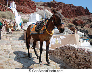 donkey on old stone stairs in Oia, Santorini, Greece
