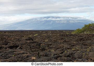 Lava fields extending till the slopes of the volcano - Lava...