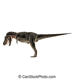 Tarbosaurus isolated on white background