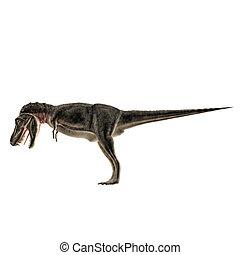 Tarbosaurus isolated on white background
