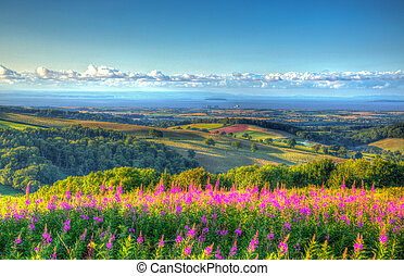 Pink flowers and Quantock Hills - View from Quantock Hills...