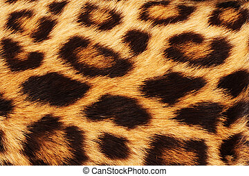 Real leopard skin spots, will make for cool background.