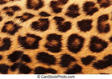 verdadero, Leopardo, piel