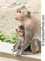monkey family sitting in the park