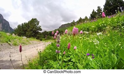 Beautiful bright wildflowers swaying in the wind in an...