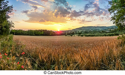 Beautiful harvest field near Assisi at sunset, Umbria, Italy...