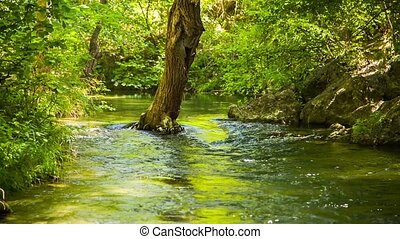 Calm River Peacefully Flowing In Green Forest - Locked down...