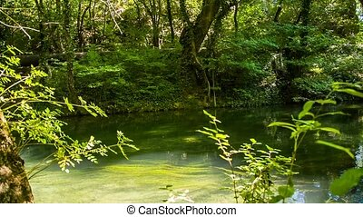 Mountain River Flowing In Picturesque Green Forest