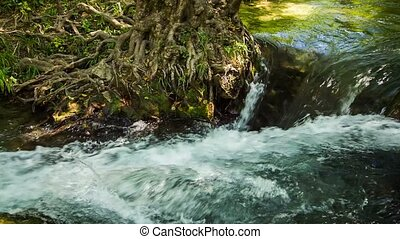 Mountain Stream Flowing In Green Forest - Tracking shot of...