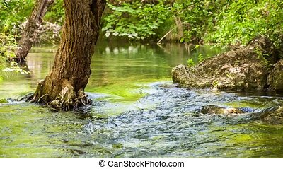Mountain River Slowing Moving Among Greenery And Stones - In...