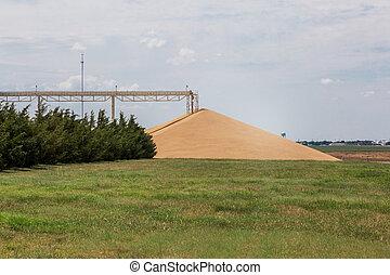 小麥, 冬天, 大, 努力,  -, 堆, 紅色