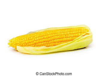 maíz, Mazorcas, aislado, blanco, Plano de fondo