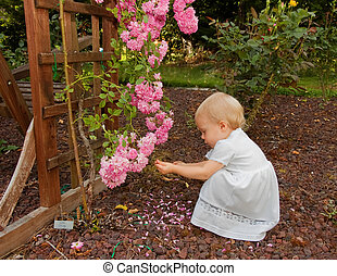 Pretty Toddler Girl Playing Near Pink Roses - This pretty...