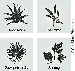 Collection of Herbs. Vector Illustration