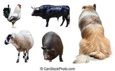 állhatatos, tanya, felett, elszigetelt, állatok, fehér