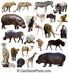 Set of hippopotamus  and other African animals