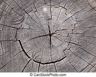 Top view of a cut tree closeup