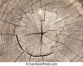 Top view of a brown cut tree