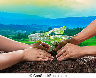 human hand planting young plant together on dirt soil against beautiful sun light in plantation field use for natural conceptual and save nature to future