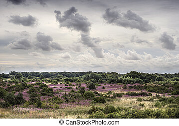 Wild Countryside - Rugged landscape with heather, bushes and...