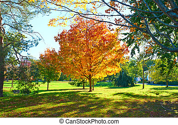 Suburban neighborhood in autumn - Suburban neighborhood at...