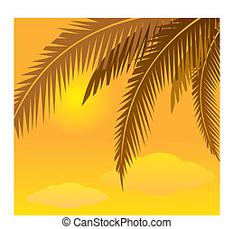 coconut tree - the coconut tree background? night, dusk,...