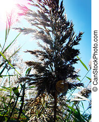 meadow foliage - meadow foliage sways in the wind on a warm...