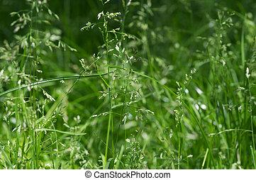 Grass green. Summer background