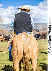 Cowboy on a horse - Cowboy riding on a brown horse .