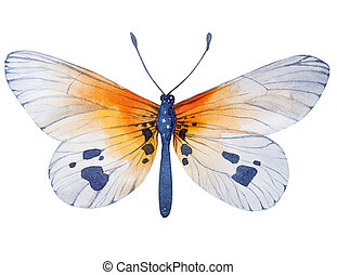 Hand painted watercolor butterfly illustration.