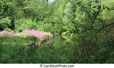 Marshland Columbine Ragged Robin - Marshland with Columbine...