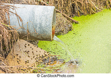 waste water running slow from a concrete pipeline direct onto a natural pond with green grass on the bank and light green small mosquito fern on the water surface