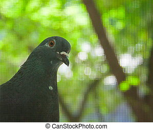 Curios Pigeon Peeking into the Window with the Summer Trees...