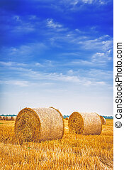 Hay bale rolls in field - Hay bale rolls in cultivated field...