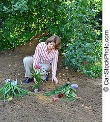 Woman planting flowers in garden - A Woman planting flowers...