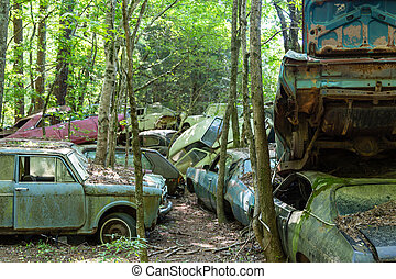 Old Wrecked Cars in Woods